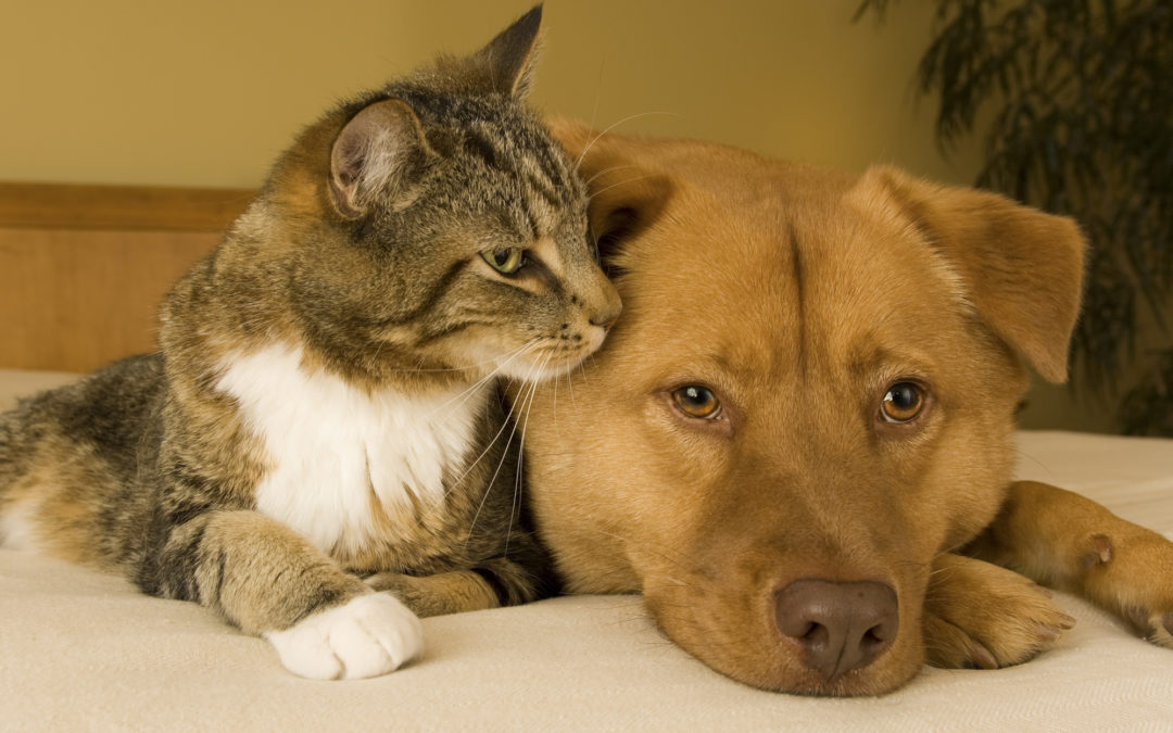 Heal Your Pets Through a Calming Reiki Session