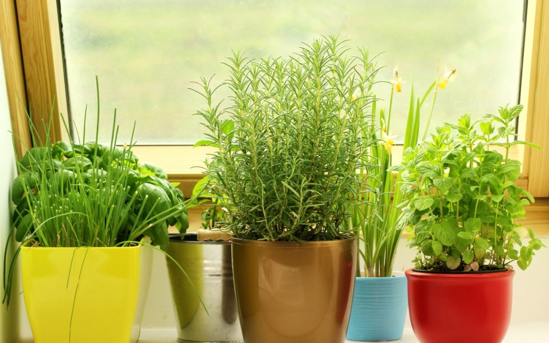 🌱5 Powerful Indoor Plants For Manifestation