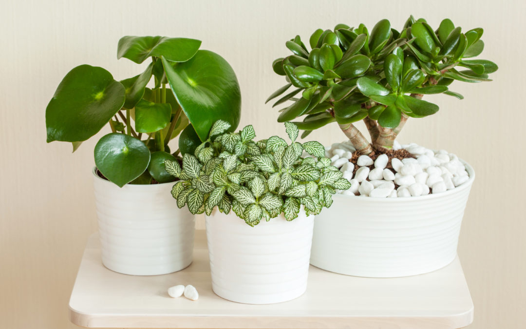 5 Indoor Plants That Can Bring Wealth Into Your Home